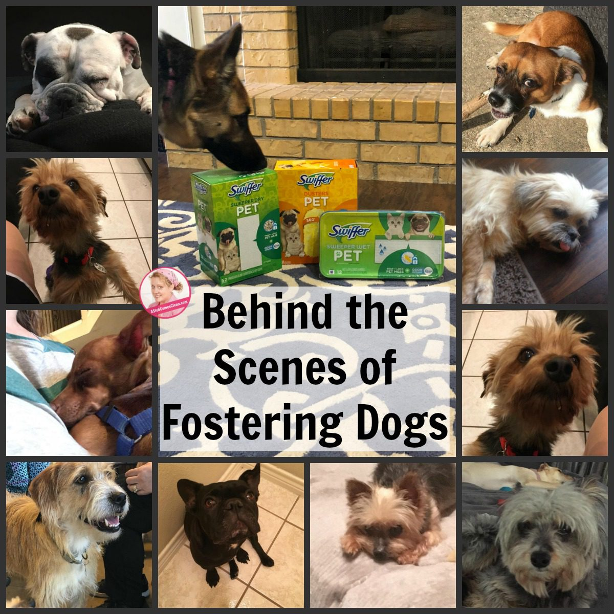 Behind the Scenes of Fostering Dogs swiffer pet at ASlobComesClean.com collage