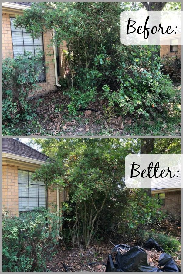 take a before photo when decluttering spring clean yard at ASlobComesClean